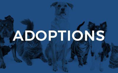 April/May Adoptions