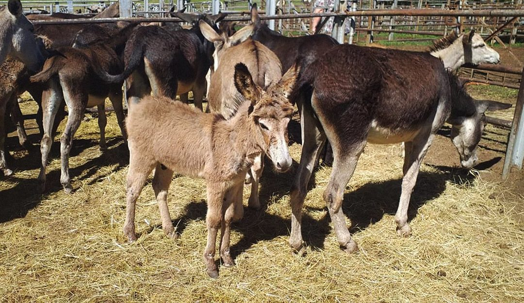 Saving the Donkeys!